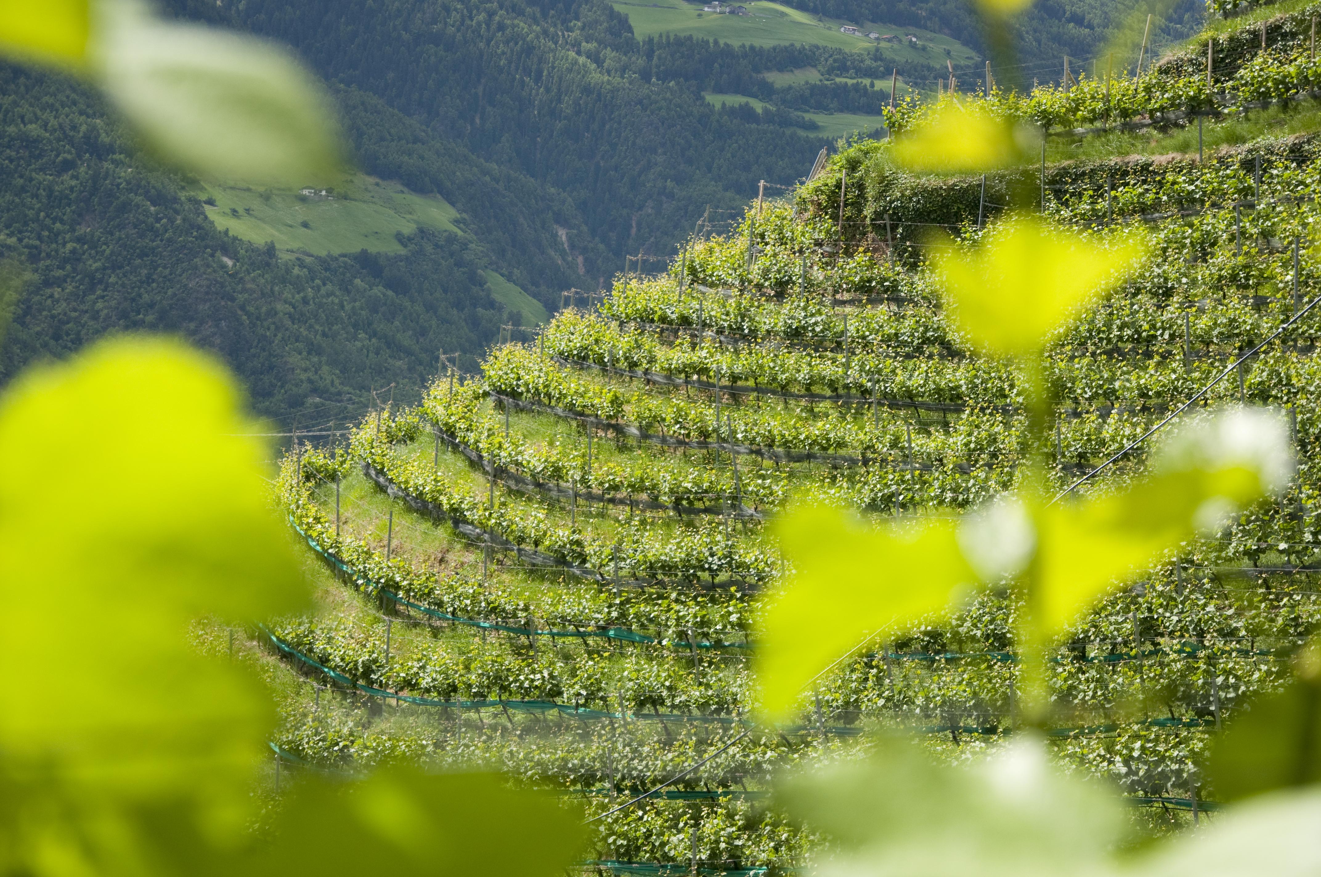 Weingut Himmelreich